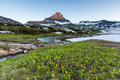 Glacier national park reynolds mountain over wil wildflower field at logan pass Stock Photo