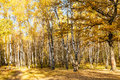 Glade in oak and birch woods in autumn Royalty Free Stock Photo