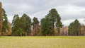 Glade in park on background of trees and cloudy sky Royalty Free Stock Photo