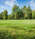 Glade in the park on background of the trees Royalty Free Stock Photo