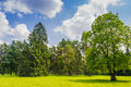 Glade in the park Royalty Free Stock Photo