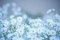 Glade of white delicate flowers. Floral background