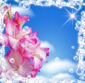 Gladiolus and clouds Royalty Free Stock Photo