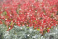 Glare in blurring circles, sunbeams defocused bokeh. Red and green texture, background. Royalty Free Stock Photo
