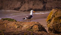 Glass beach trail photos in fort bragg ca of the coastal Royalty Free Stock Images