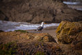 Glass beach trail photos in fort bragg ca of the coastal Royalty Free Stock Image