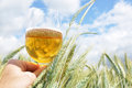 Glass of beer in the hand against barley ears Royalty Free Stock Photo