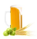 Glass of beer isolated ears wheat and hop on white background Royalty Free Stock Images
