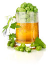 Glass beer with rich and aromatic hop Stock Image