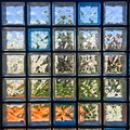 Glass block framed in concrete and blocks Stock Photography