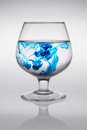 Glass with blue ink that creates waves of color creating of colored waves Royalty Free Stock Photo
