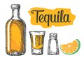 Glass and botlle of tequila. Cactus, salt, lime. Glass and botlle of tequila. Cactus, salt and lime Hand drawn sketch