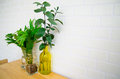 Glass bottles with plant on table Royalty Free Stock Photo