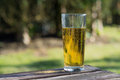 Glass of cider on table pint beer garden Stock Image