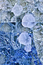Glass flowers Royalty Free Stock Photo
