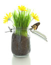 Glass jar with soil grass with flowers and butterfly isolated on white Royalty Free Stock Images