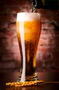 Glass of lager Royalty Free Stock Images