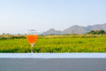 Glass of orange drink with back ground of mountains and grass field on a white wall background in the distance Stock Photography