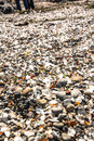 Glass pieces in the glass beach fort bragg a lot of california Royalty Free Stock Photo