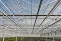 Glass roof of a big dutch greenhouse view at Stock Image
