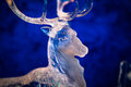 Glass sculpture of a deer Royalty Free Stock Image