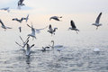 Glass on a stone gulls and swans in the sea Royalty Free Stock Photo