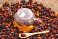Glass Teapot of Herbal Dog Rose Tea With Dried Rosehips, Types Rosa Canina Hips Hot Drink of Medicinal Plants and Herbs Wooden Royalty Free Stock Photo
