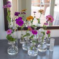 Flower arrangement, some colorful zinia in small glass vases Royalty Free Stock Photo