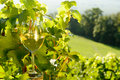 Glass of white wine exposed towards the sun, Royalty Free Stock Photo