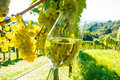 Glass of wine in the vineyard with winemaker autumn ripe grapes Royalty Free Stock Image
