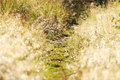 Gleamy grass footway and morning dew sparkly Stock Images