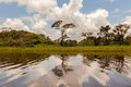 A glimpse into cuyabeno wildlife reserve sucumbios province sunny day in the amazonian jungle Stock Images