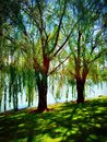 Glistening Trees Royalty Free Stock Photo