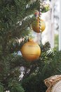Glitter gold christmas ball decorated on tree Stock Image