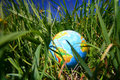 Globe in grass Stock Image