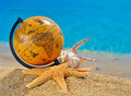 Globe shells starfish in the beach near ocean Royalty Free Stock Image