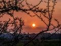 Globe Sunset Framed With Tree ...