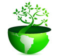 Globe tree Stock Images