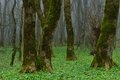 Gloomy forest this is in caucasus nature in spring Stock Photography