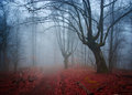 Gloomy misty country road in autumn forest.Shallow depth of field
