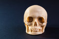 Gloomy skull a tiny and dirty model made of stone Stock Images