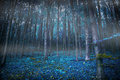 Gloomy surreal woods with lights and blue vegetation, magic fair