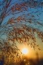 Slávny slnko stúpajúci na chladný ráno
