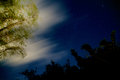 Glowing bamboo night sky with clouds and stars looking up at the through trees are blurred from long exposure giving them a mist Royalty Free Stock Photo