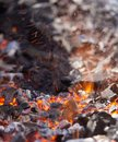 Glowing coal in hot furnace Royalty Free Stock Photo