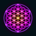 Glowing geometrical flower of life pattern ornament Royalty Free Stock Photo