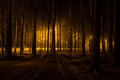 Glowing light in the dark woods night time southern finland pine wood forest with street Stock Photography