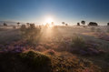 Glowing misty sunrise on dune with heather Royalty Free Stock Photo
