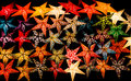 Glowing Paper Star Christmas Decorations in Black Background Royalty Free Stock Photo