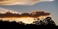Glowing sunset over gum trees in nsw australia Stock Photos